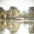 Winter Reflection Landscape by Julie Palencia