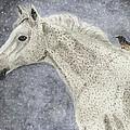 Winter Rider by Angela Davies