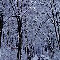 Winter Road by Greg Kear