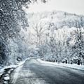 Winter Road In Forest by Elena Elisseeva