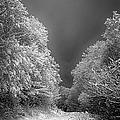 Winter Road by John Haldane