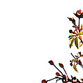 Winter Rose by Linda Shafer