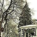 Winter Scene  by Chris Berry