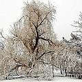 Winter Scene by Kathleen Struckle