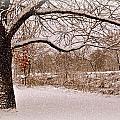 Winter Scene by Marty Koch