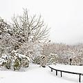 Winter Scene by Regina Geoghan