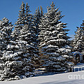 Winter Scenic Landscape by Gary Keesler