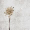 Winter Seeds by Jamie McCann