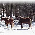 Winter Shadow Horses by MTBobbins Photography
