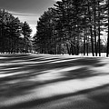Winter Shadows by Bill Wakeley