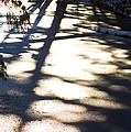 Winter Shadows by Yulia Kazansky
