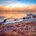 Winter Shore by Tara Turner