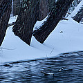 Winter Snow On Pond by John Magyar Photography