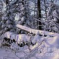Winter Solemn by Timothy Hacker