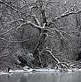 Winter Solitude by Carol Groenen