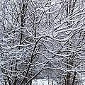 Winter Storm by David Neace