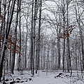 Winter Storm In The Forest by Debbie Oppermann