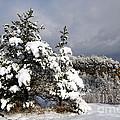Winter Storm On Natural Bridge - D001598 by Daniel Dempster