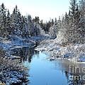 Winter Stream by J L Kempster
