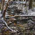 Winter Stream by J McGill