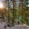 Winter Sun Flares by Pati Photography