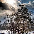 Winter Sun by Pat Eisenberger