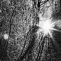 Winter Sunburst by Michele Cornelius