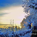 Winter Sunburst by Nina Ficur Feenan