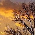Winter Sunset In Pa by Jeanette Oberholtzer