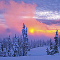 Winter Sunset by Ingrid Smith-Johnsen
