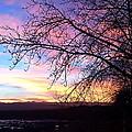 Winter Sunset by Krista Siddall