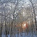 Winter Sunset by Pema Hou