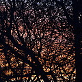 Winter Sunset Silhouette by K Conway
