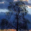 Winter Sunset by Skip Willits