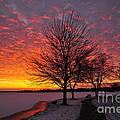 Winter Sunset by Terri Gostola