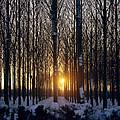Winter Sunset Through The Trees by Robert Hallmann