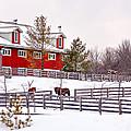 Winter Thoroughbreds by Steve Harrington