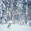 Winter Time In Forest by Romeo Koitmae
