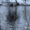 Winter Touch by Carol Groenen