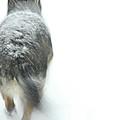 Winter Traveler by Karol Livote
