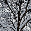 Winter Tree 1 by William Norton