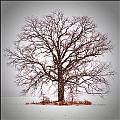 Winter Tree 8x10 Crop With White Bars by Gene Tatroe