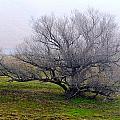 Winter Tree by AJ  Schibig