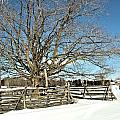 Winter Tree And Fence by Valerie Kirkwood
