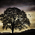 Winter Tree And Ravens by Carol Leigh