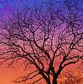 Winter Tree by Ann Powell