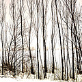 Winter Tree Fence 13283 by Jerry Sodorff