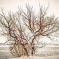 Winter Tree by Grace Grogan