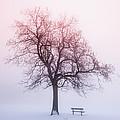 Winter Tree In Fog At Sunrise by Elena Elisseeva