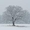 Winter Tree Ipswich Ma by Toby McGuire